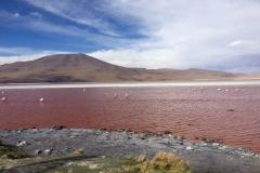 03.Bolívia - Laguna Colorada